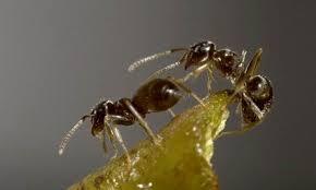 ants doorbell
