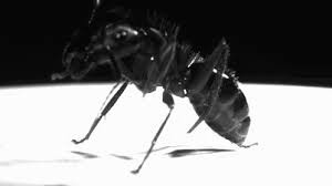 image of ant cleaning itself