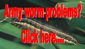 army worm problems