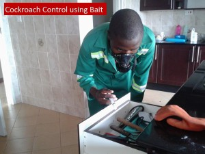 cockroach control services harare zimbabwe