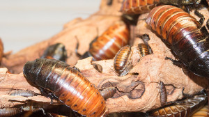 Cockroach farms are a booming business for some Chinese farmers