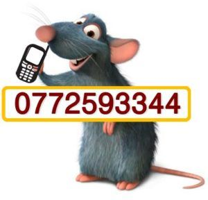 contact us rodent