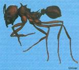 ant control bulawayo