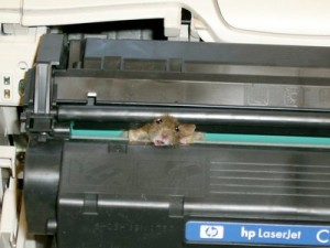 mouse gets jammed in printer cartridge