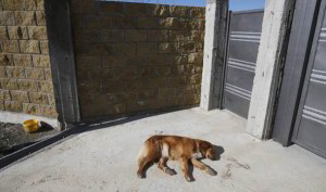 stray dog sochi 3