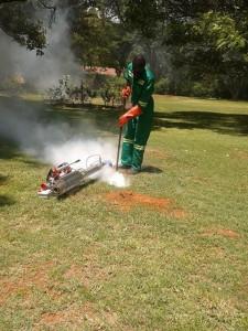 Termite Control Companies in Harare